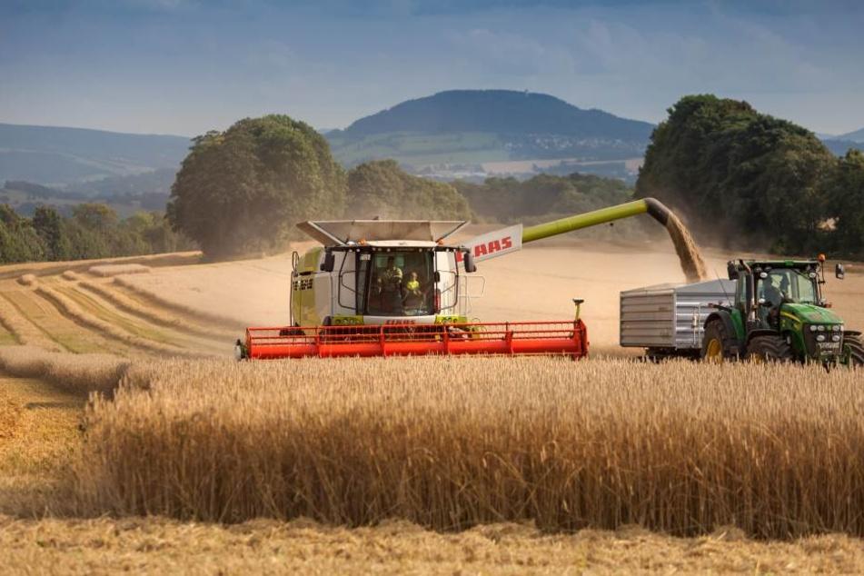 In dieser Woche wurde in Neundorf im Erzgebirge Gerste geerntet. Sachsens Landwirte haben in diesem Jahr auf 363.000 Hektar Getreide angebaut.