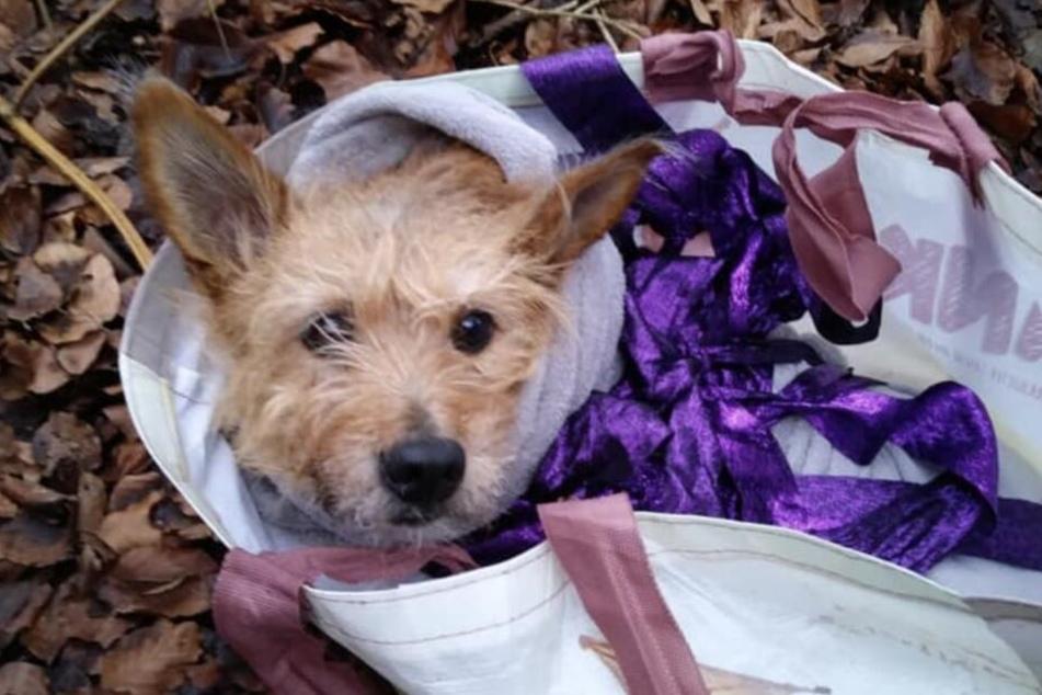 Hund gefesselt im Wald gefunden