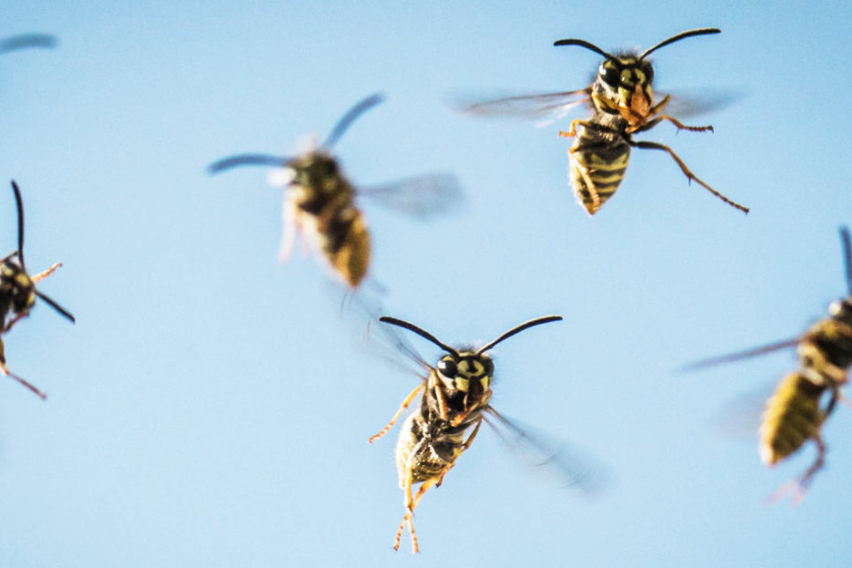 Viele Menschen haben das Gefühl, dass die stechenden Insekten in diesem Jahr besonders eifrig unterwegs sind.