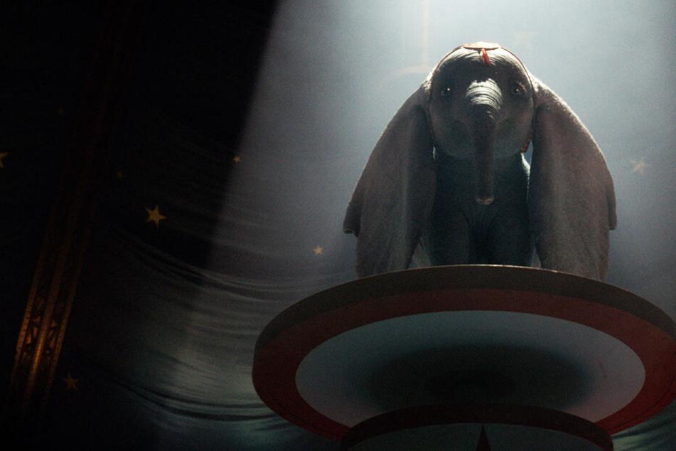 """Wie niedlich: Elefant """"Dumbo""""im neuen Trailer zu Walt Disneys Realverfilmung"""