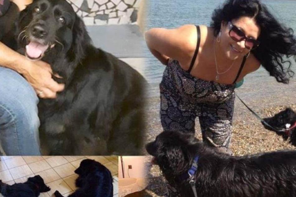 """Iris Klein trauert um ihren Hund Josy: """"Komm' gut über die Regenbogen-Brücke"""""""