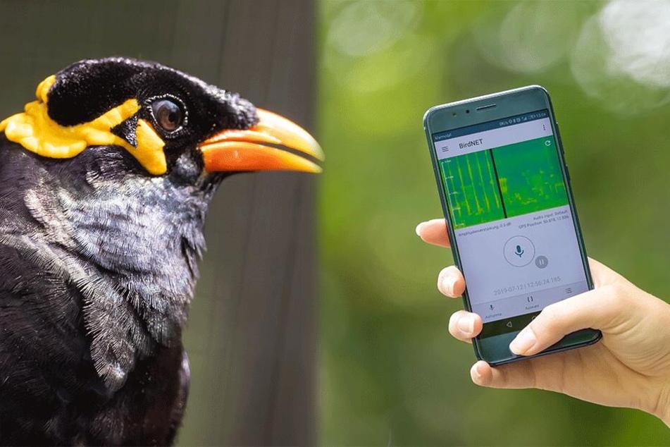 Was zwitschert denn da? Diese App erkennt Vogelstimmen!