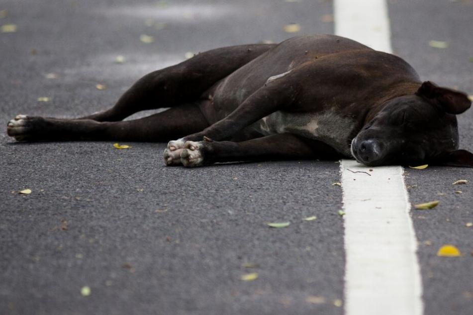 Hund von Auto erfasst und durch die Luft geschleudert: War es Absicht?