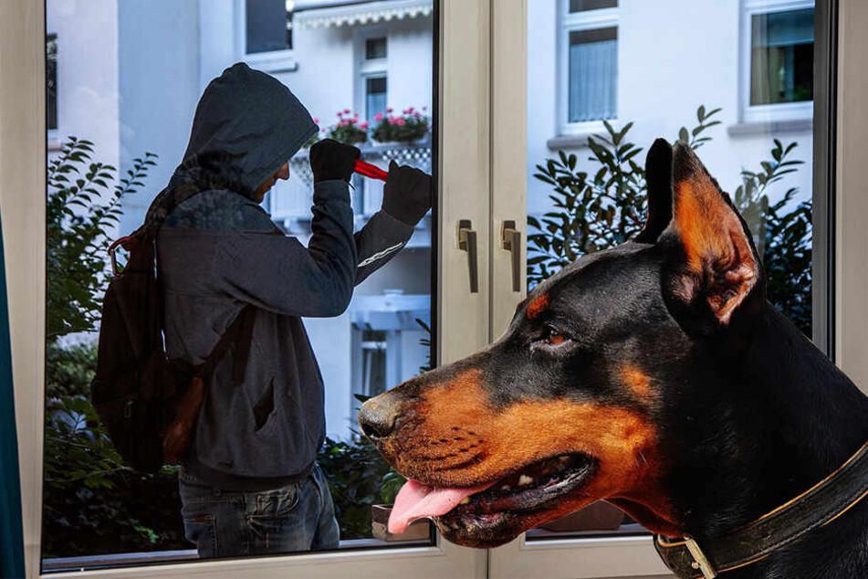 Dem Hunde sei Dank! Die Einbrecher gingen leer aus.