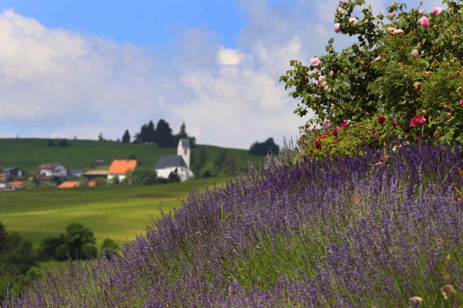 Die Gastwirte in Oy-Mittelberg sind mittlerweile Duftgastgeber, ein Erlebnisrundgang wird geplant.