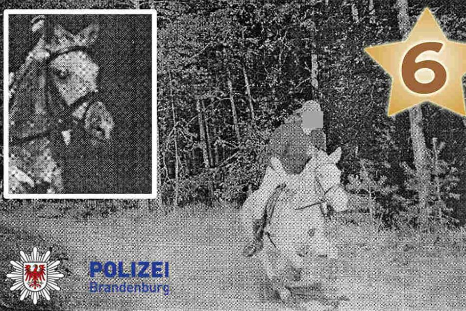 In Brandenburg wurde ein Pferd mitten im Galopp von einem Blitzer erfasst.
