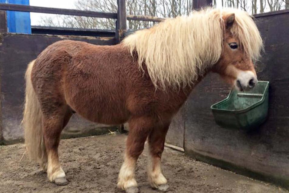 Bei einem Reitunfall mit einem Pony kam ein siebenjähriges Mädchen ums Leben (Symbolbild).