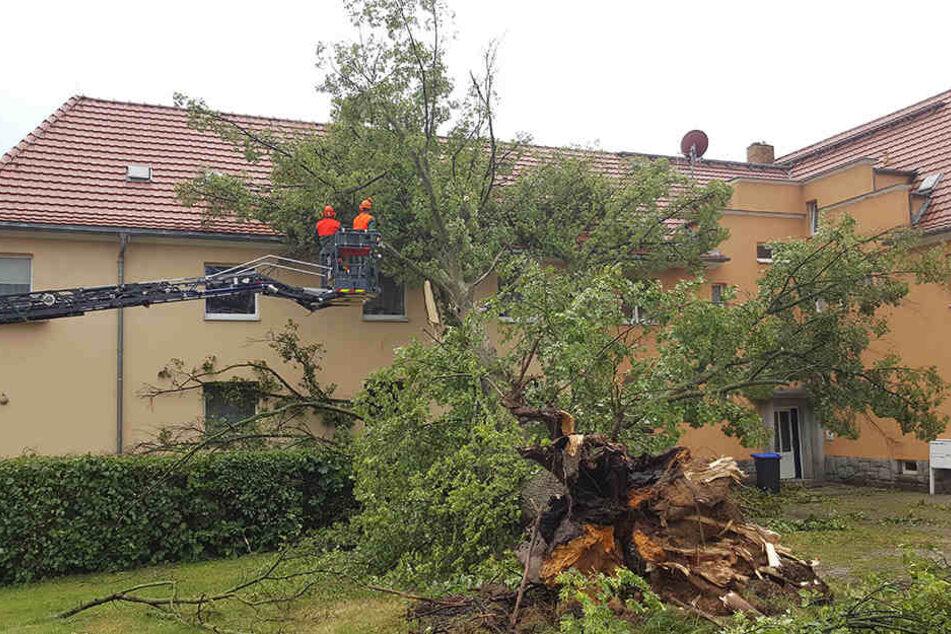In der August-Bebel-Straße in Demitz-Thumitz kippte am Nachmittag gegen 17:15 Uhr eine Linde auf ein Wohnhaus. Dabei gingen Fenster kaputt und das Dach wurde stark beschädigt.