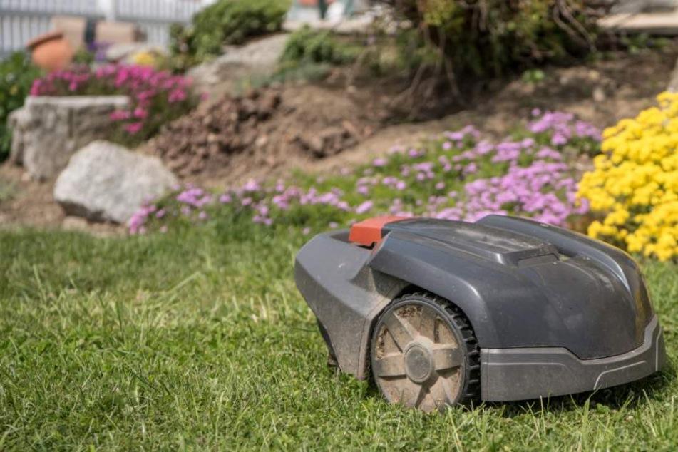 Der Rasenroboter soll einen Tankschlauch beschädigt und damit einen großen Schaden verursacht haben (Symbolbild).