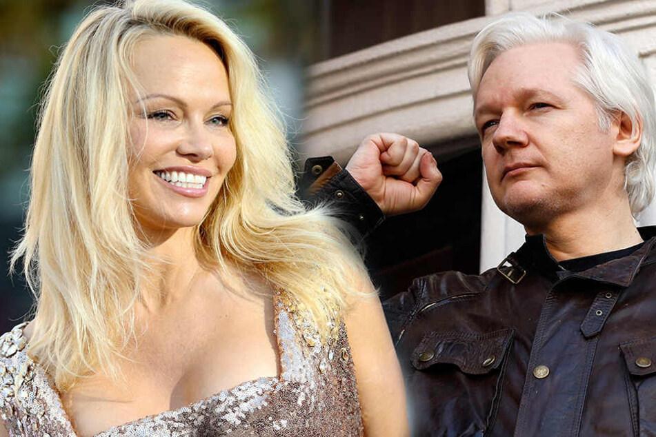 Schon mehrfach soll Pamela Anderson Julian Assange in der ecuadorianischen Botschaft besucht haben.