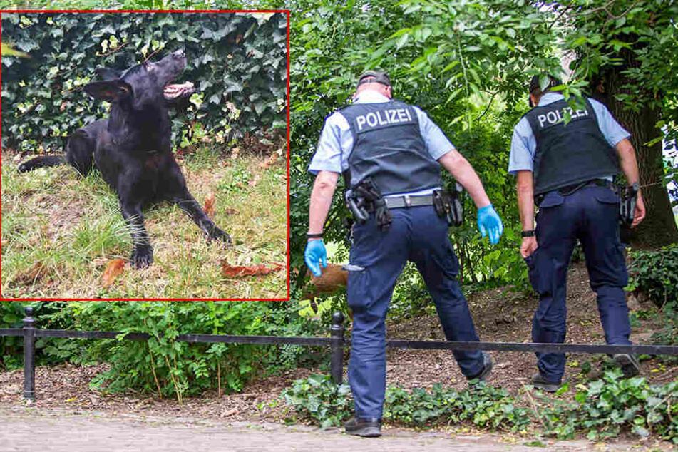 Drogenspürhund Nero (links) hat am Mittwoch wieder viele Drogenverstecke ausgehoben.