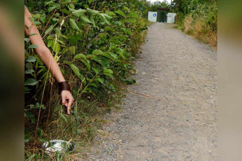 Finderin Nicole D.* zeigt auf die Stelle, an der sie den Hund am 25. Juli gefunden hatte.