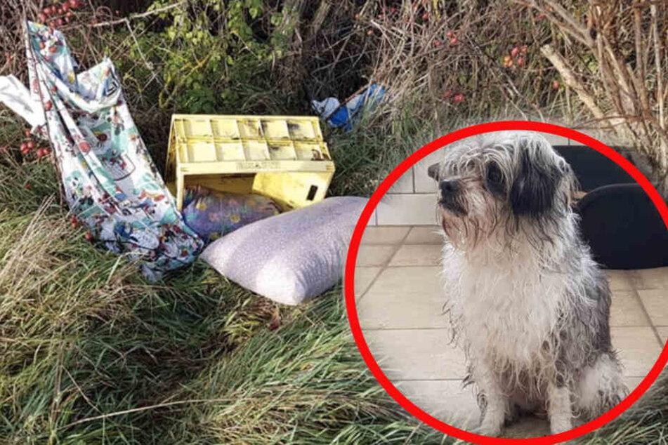 In einer Box mit Kissen wurde das Tier ausgesetzt.