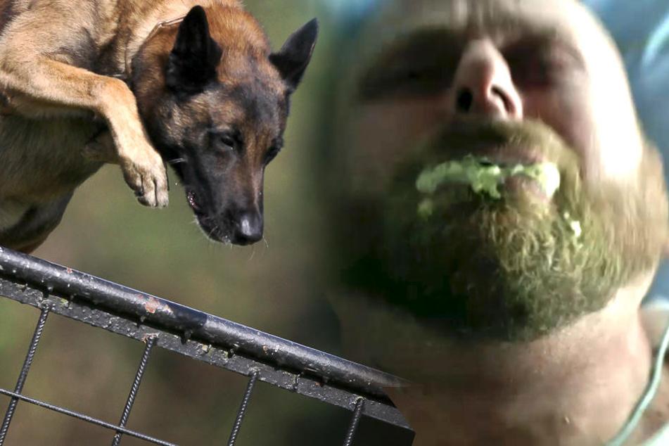 In Deutschland ist die Tollwut bei Wild- und Haustieren allerdings durch systematische Bekämpfungsmaßnahmen nahezu vollständig ausgerottet.