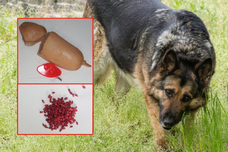 Mann will Hund mit Rattengift töten, das Tier ist schlauer