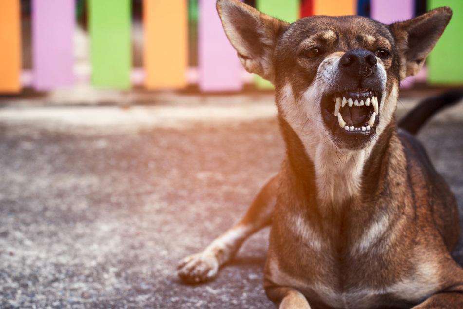 Während Eltern drinnen feierten: Junge von Hunden tot gebissen