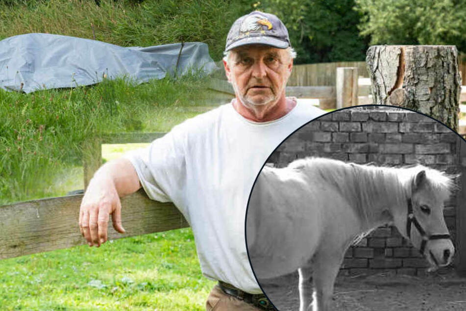 "Tot in der Spree gefunden: Pferdehof trauert um süßes Pony ""Snoopy"""