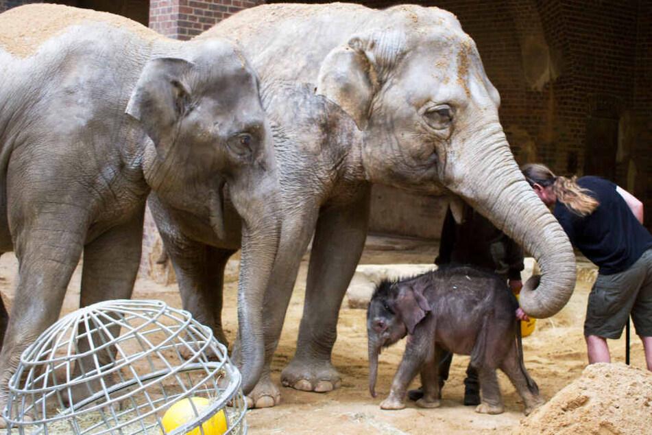 """""""Elefant, Tiger & Co."""": Fürs Elefantenbaby wird's auch mit den Tanten gefährlich"""
