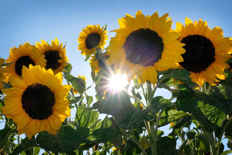 Die Sonne zeigt sich in NRW erst ab Donnerstag wieder von ihrer besten Seite (Symbolbild).