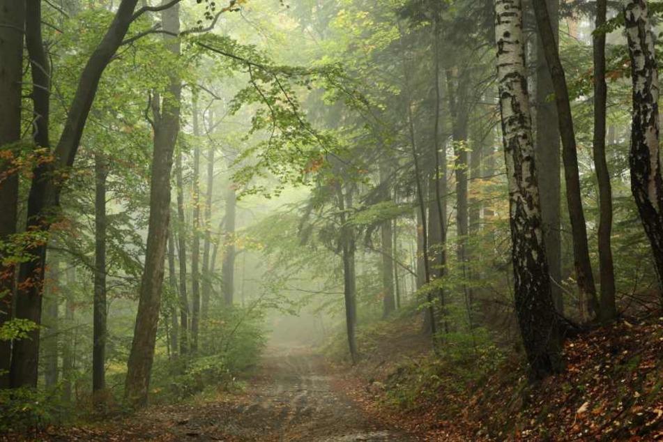 Der Vermisste ging in Richtung eines nahegelegenen Waldstücks spazieren. (Symbolbild)