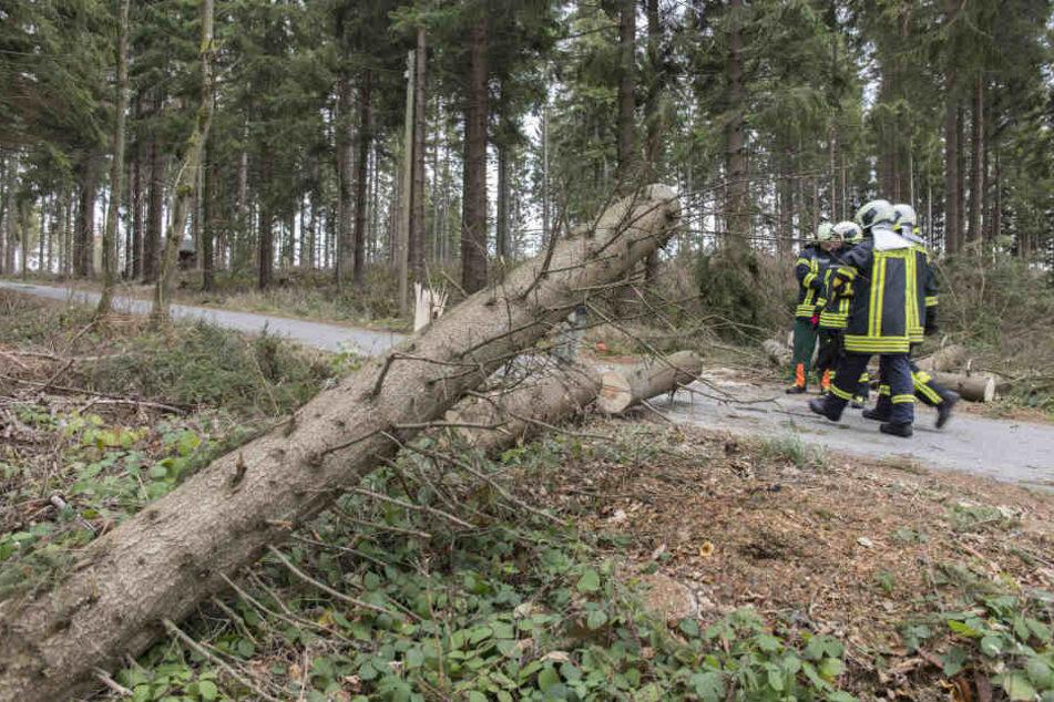 Die Feuerwehr aus Scheibenberg war vor Ort.