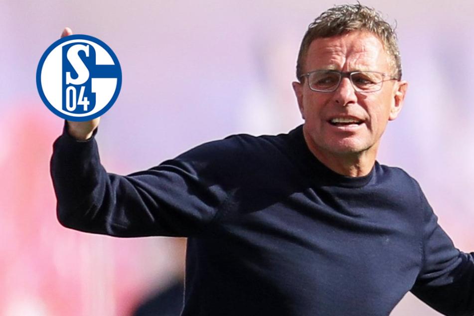 """Ralf Rangnick sagt FC Schalke 04 ab! Aufsichtsrat """"überrascht"""" von dessen Rückzieher"""