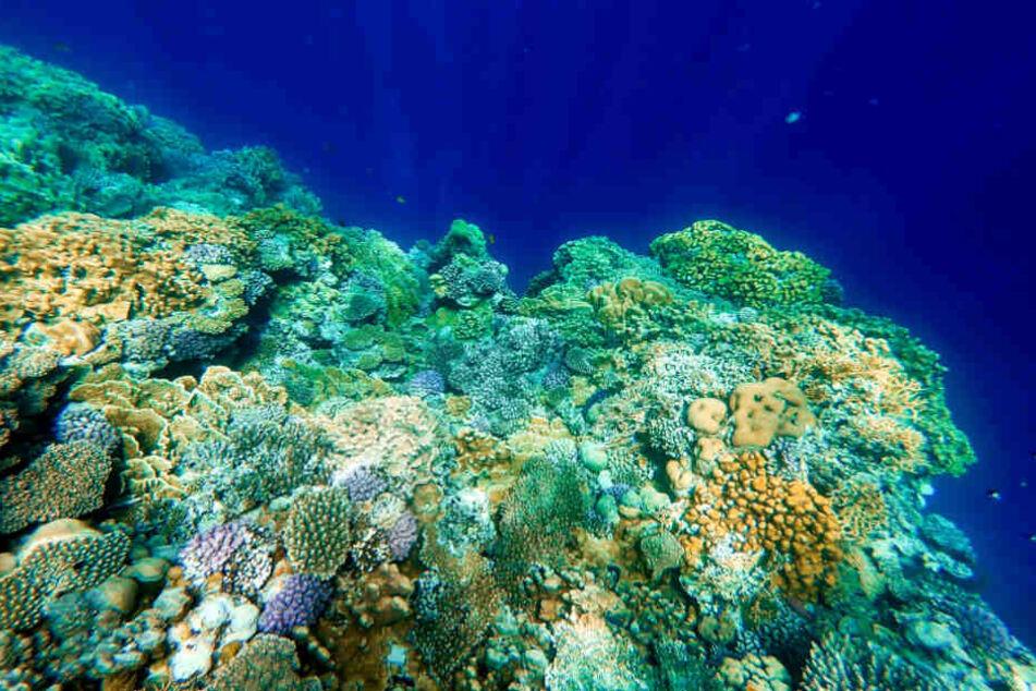 Bestimmte UV-Filter und Mikroplastik schaden Korallen und Fischen (Symbolfoto).