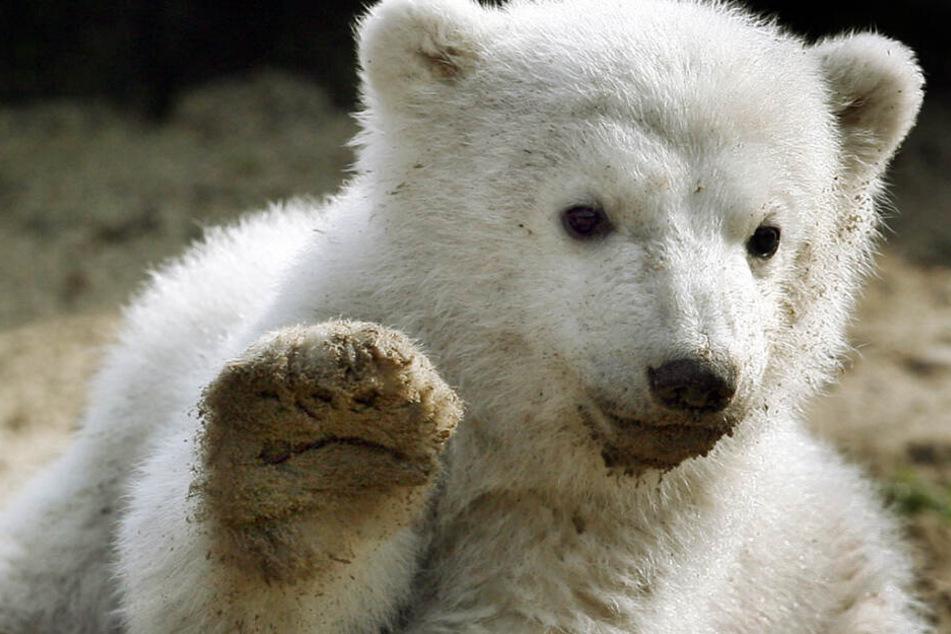 Grumpy Cat, Choupette & Knut: Das sind die 13 berühmtesten Tier-Stars