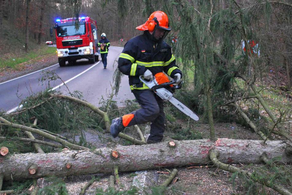 Wälder in NRW sollten aufgrund des Sturms und seiner Folgen derzeit gemieden werden.