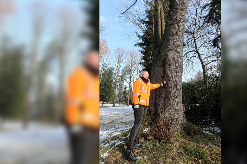 """Stadtgärtnerin Katrin Kretzschmar vor der fast 90-jährigen Vogelweide-Linde. Der 1930 im Stadtpark gepflanzte Baum musste nach Sturm """"Friederike"""" extra gesichert werden."""