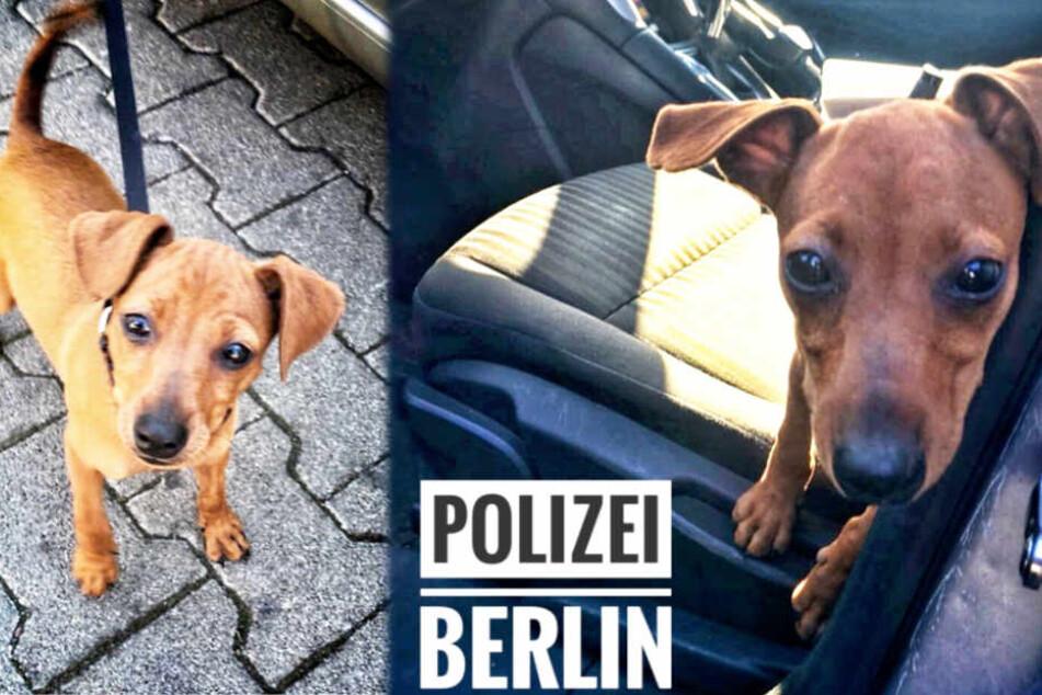Ohne Wasser in der Sonne! Polizei rettet durstigen Hunde-Welpen aus Auto