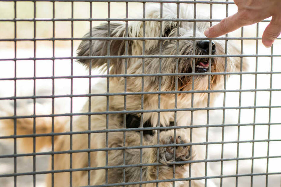 Rassenwahn bei Hunden? PETA kritisiert Ausstellung in Leipziger Messe