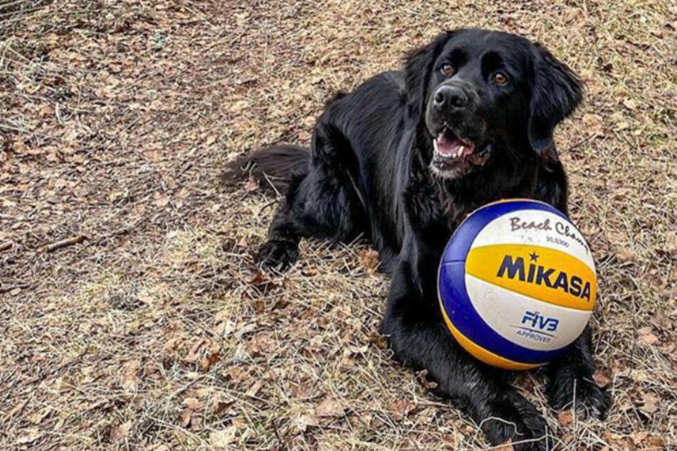 Kiara kann gar nicht genug von Volleybällen bekommen.
