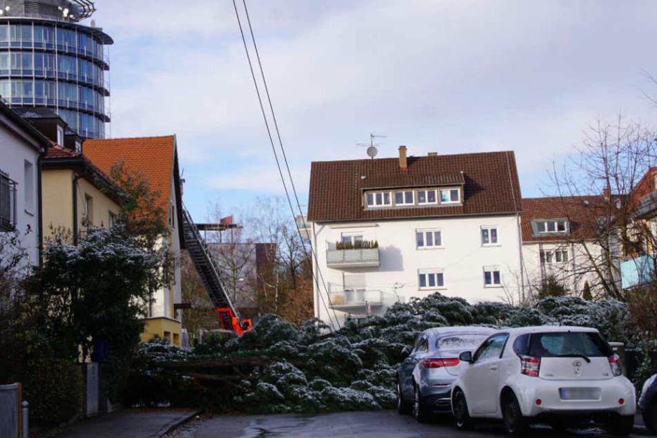 Die umgekippte Tanne in der Leinfelder Straße.