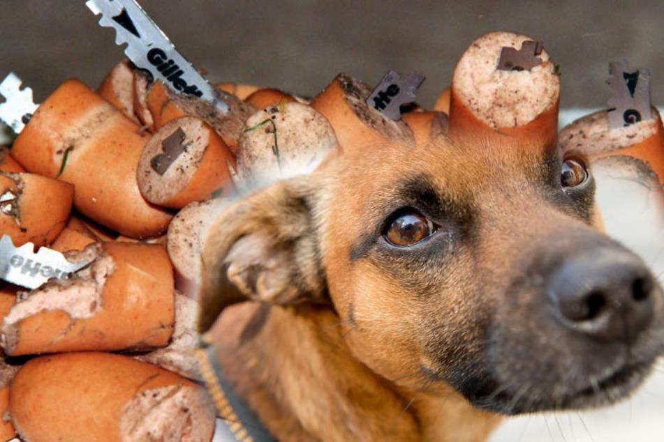 Hundebesitzer aufgepasst: Tierhasser verteilt Würstchen mit Rasierklingen
