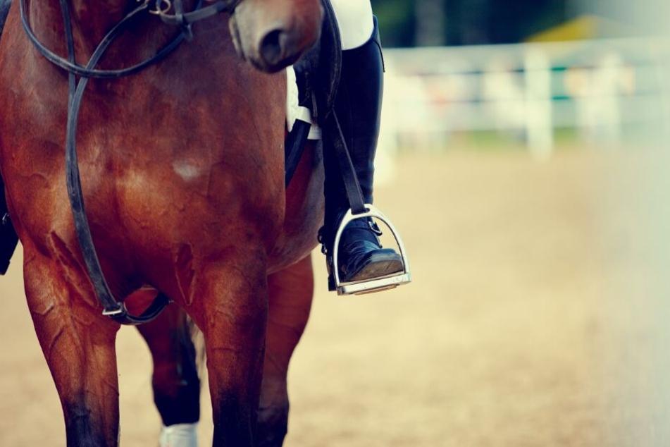 Das Mädchen stand grad mit ihrem Pferd bei der Siegerehrung, als es scheute. (Symbolbild)