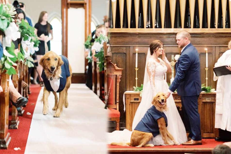 Dieser Hund stiehlt dem Brautpaar die Show
