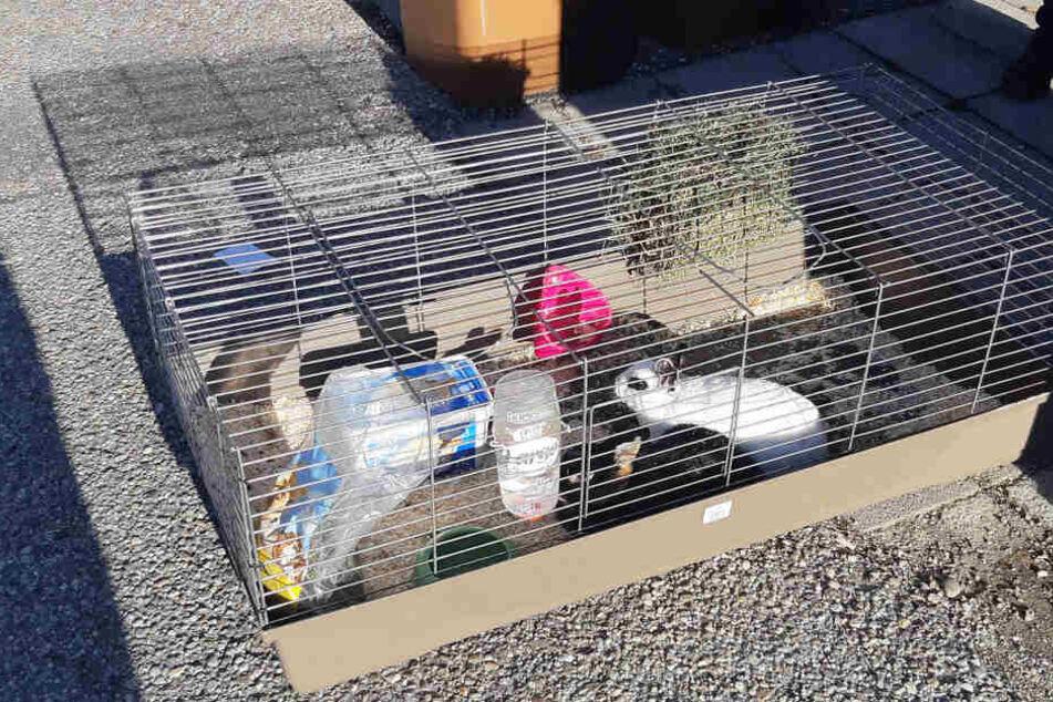 So standen die Kaninchen für glücklicherweise nur kurze Zeit neben den Mülltonnen.