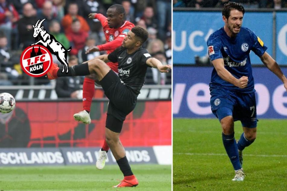 1. FC Köln will Falette und Uth: Gehen die Transfers noch heute über die Bühne?