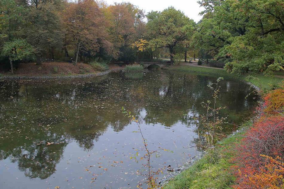 Die Uferbereiche der Kanalkette zwischen Carolasee und Herkulesallee im Großen Garten sollen saniert werden.