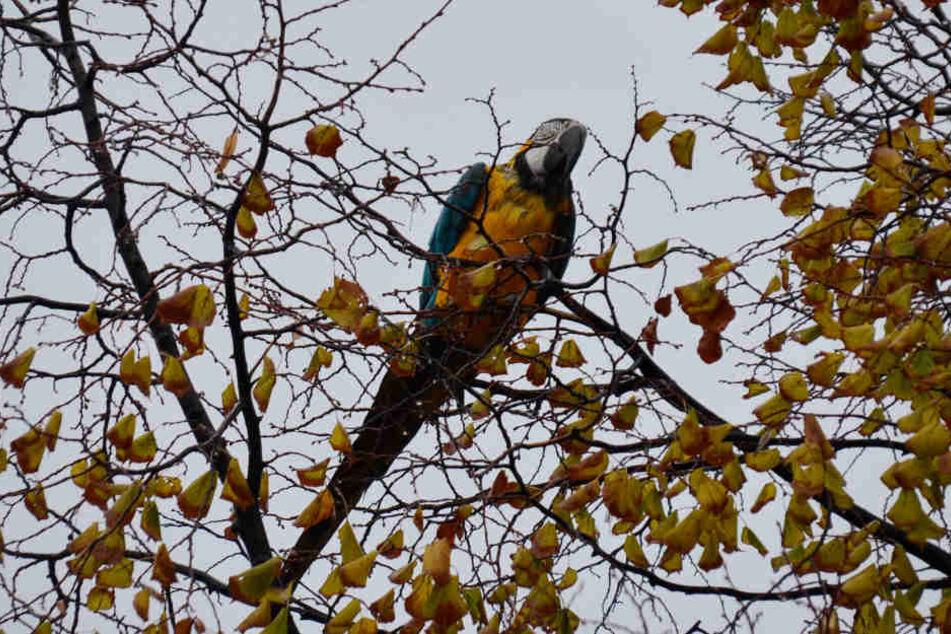 Da saß Paco noch im Baum und genoß seine Freiheit.