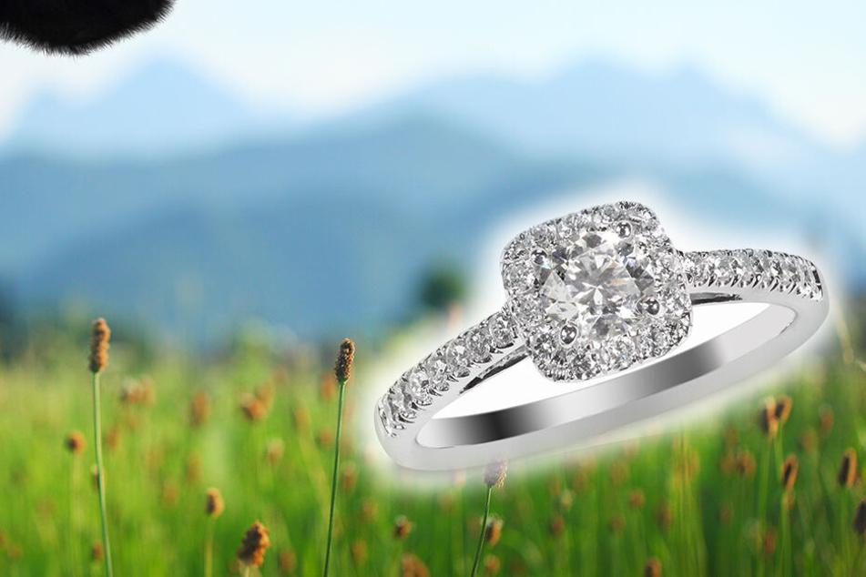 """Heiratsantrag mithilfe einer Kuh! Unfassbar, wo er den Ring """"versteckt"""""""