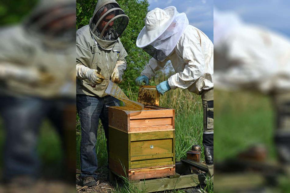 Rund 40 solcher Bienenstöcke wurden einem Hobby-Imker am Leipziger Nordrand gestohlen. Der Täter war ein Gewerbe-Imker.