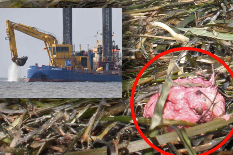 Nicht berühren! Fettklumpen an Ostseeküste gefährlicher als gedacht