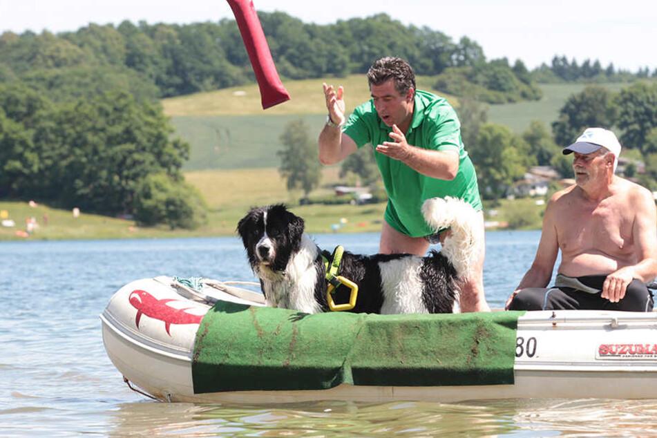 Das Training erfolg vom Boot aus, hier Landseer Frieda mit Herrchen Ralf Blümel, rechts Uwe Heidenfelder. Frieda trägt ein Rettungsgeschirr, an dem sich Ertrinkende festhalten können.