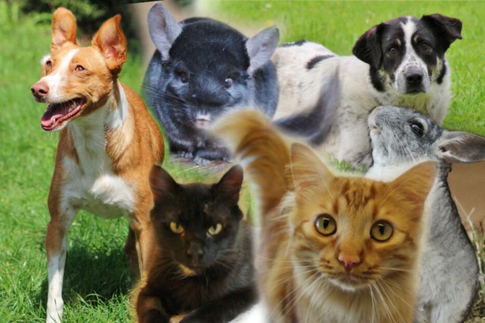 6 besondere Hunde, Katzen und Chinchillas: Ihre Geschichten gehen ans Herz