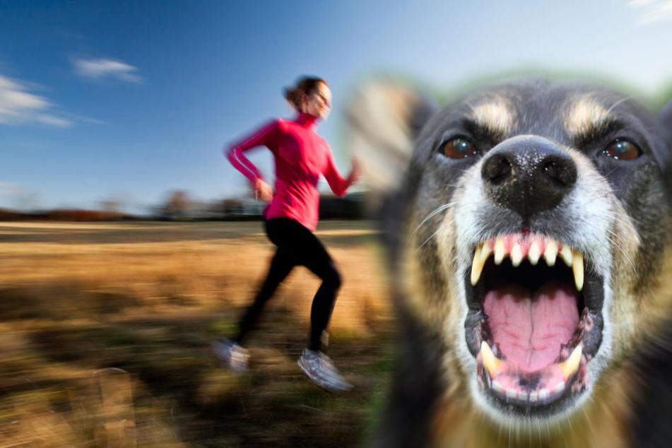 Der Hund riss die Joggerin um, dann biss er zu. (Symbolbild)