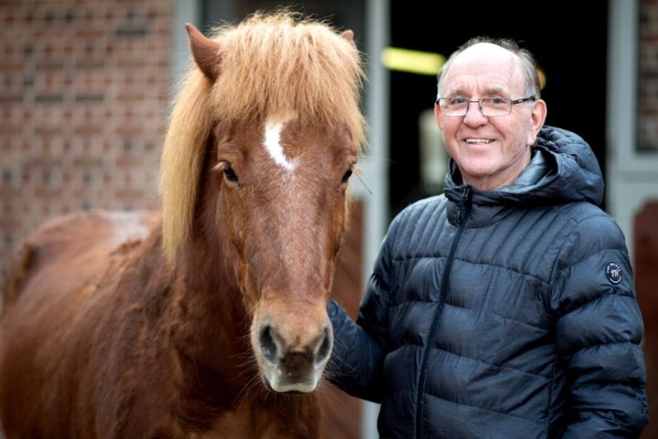 Auf einer Weide von Herbert Olasón, dem Inhabers eines Islandpferde-Gestüts, wurde eine acht Monate alte Stute von einem Wolf gerissen.