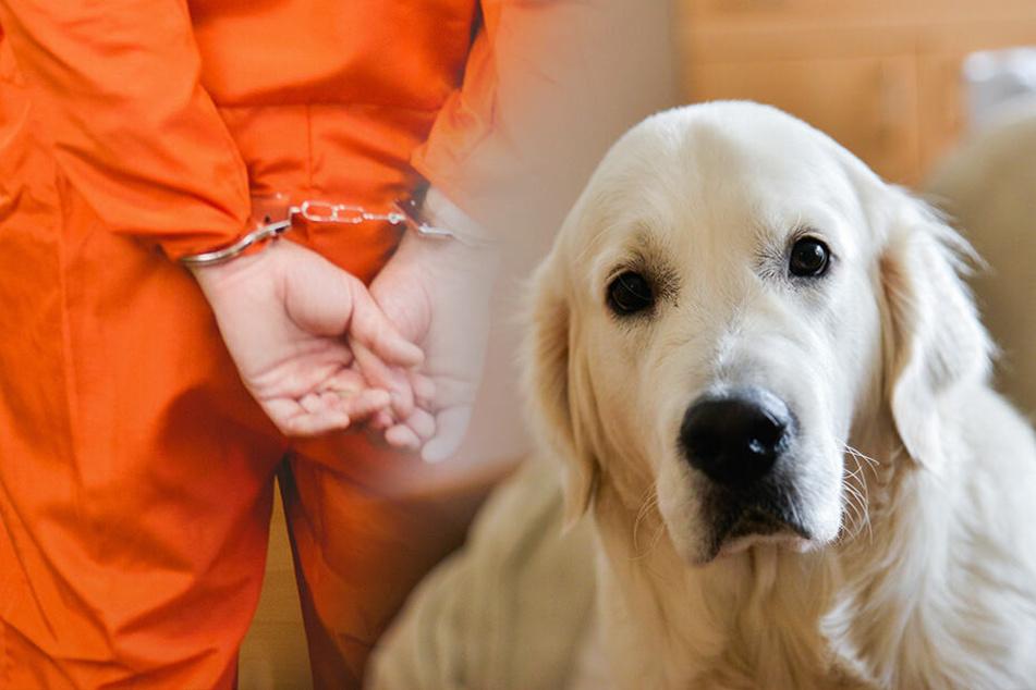 """""""Bestialische Handlungen"""": Sex-Täter vergreift sich an mehreren Hunden"""