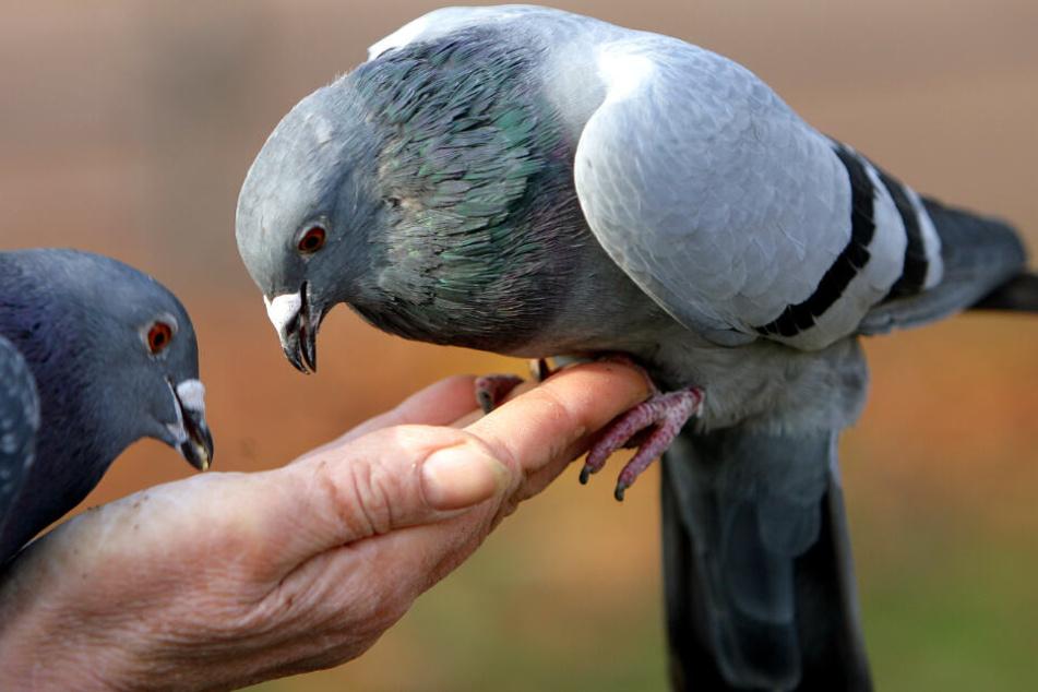 Bis zu 5000 Euro Strafe! Diese Stadt verbietet das Füttern von Tauben